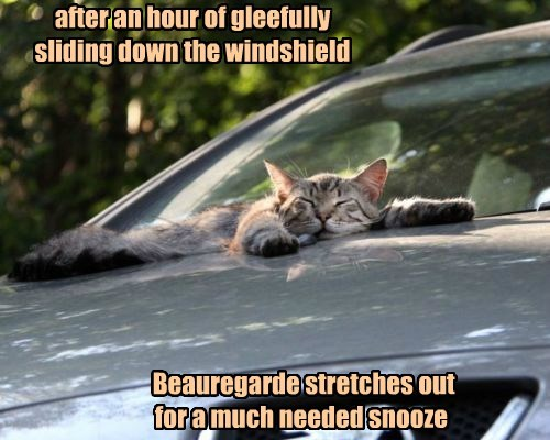 car napping Cats - 8400140800