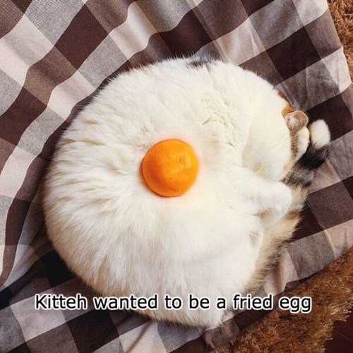 they said i could be anything,eggs,Cats