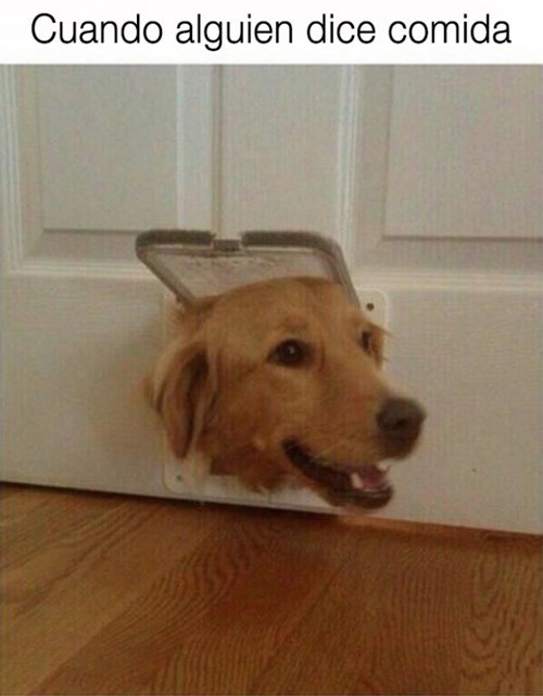bromas perros Memes animales - 8400241664