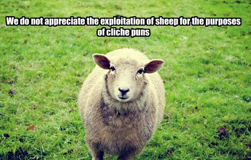 nope,puns,sheep