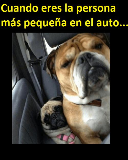 Memes animales perros bromas - 8400366080