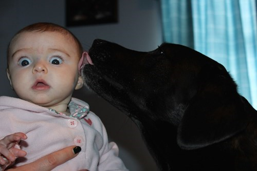 baby,dogs,expression,lick,parenting