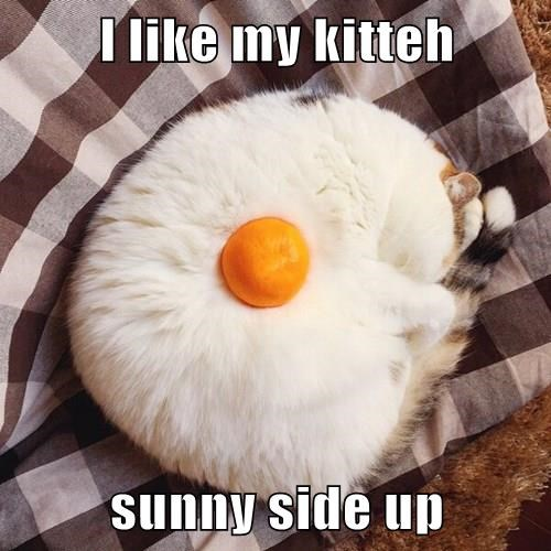 eggs,brunch,Cats