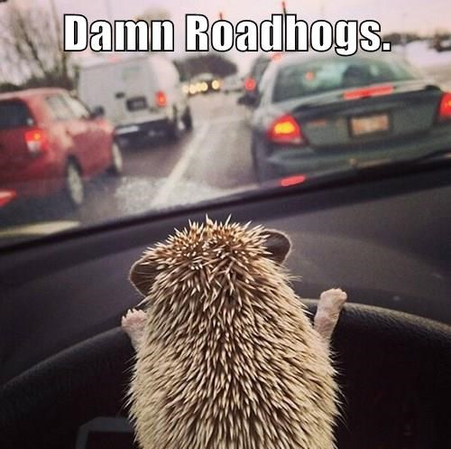animals puns road rage hedgehog - 8401064448