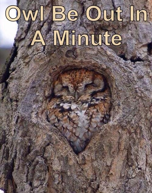 animals Owl tree sleeping