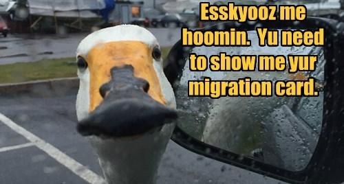 migration human goose - 8401262080