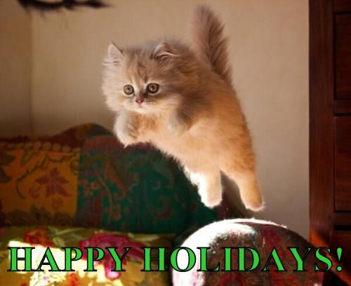 Image result for happy holidays animal meme