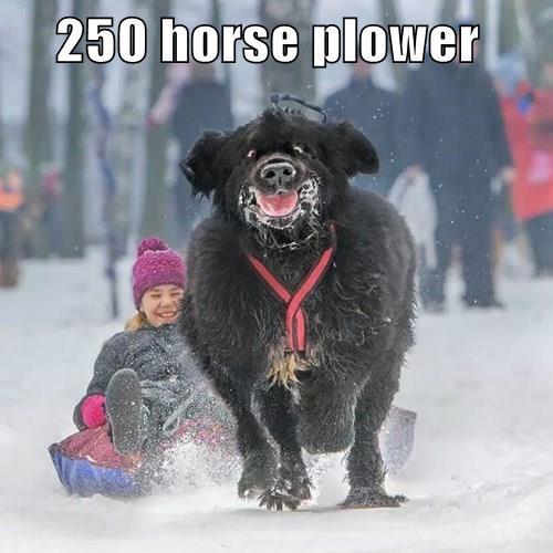 animals - 8401469184