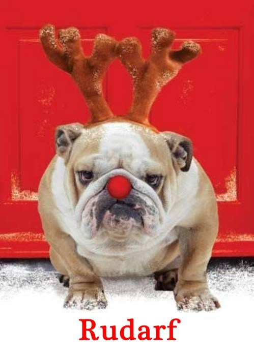 animals dogs reindeer bulldog rudolph - 8401485568