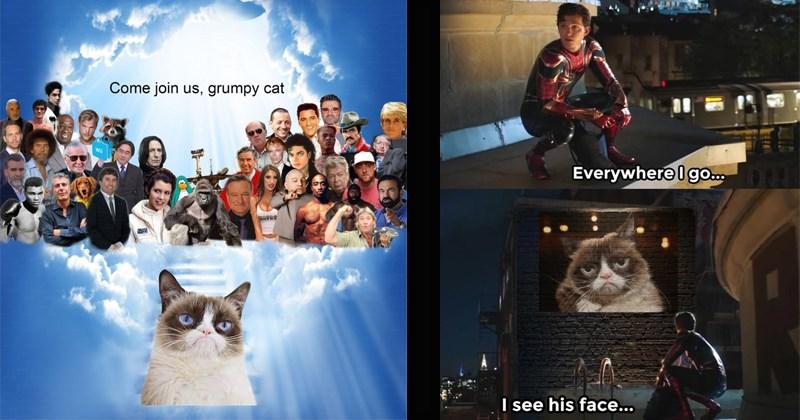 Sad Grumpy Cat pets Death unimpressed passing funny memes heartbroken heartbreaking Cats - 8401669