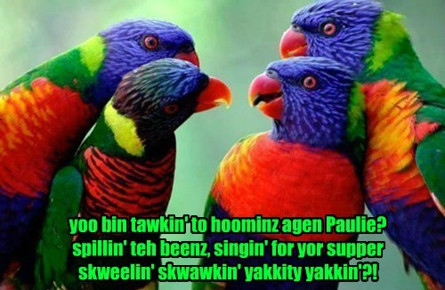 birds talking parrot - 8401757696
