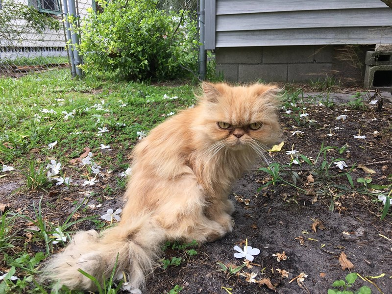 floof mango homeless grumpy happy ending Cats stray rescue