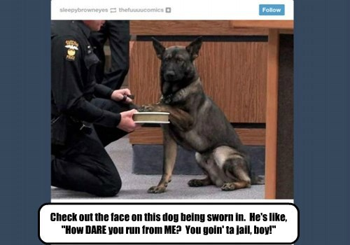 """Check out the face on this dog being sworn in.  He's like, """"How DARE you run from ME?  You goin' ta jail, boy!"""""""