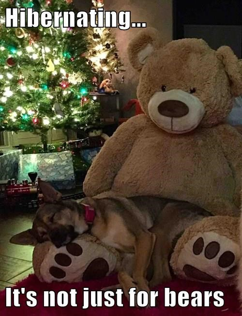 animals christmas dogs hibernate monday - 8402143488