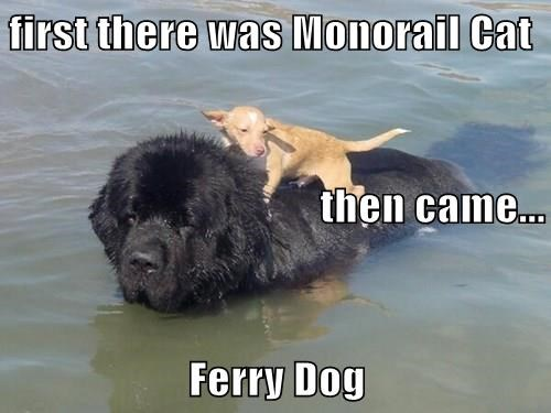 dogs,monorail cat,ferry