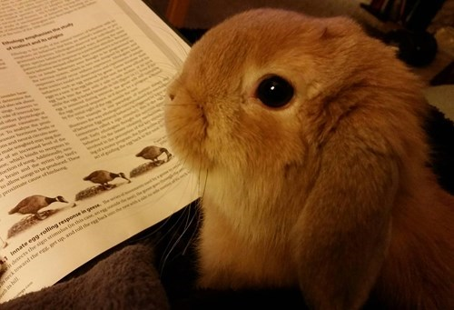 studying happy bunday cute bunny - 8402385408