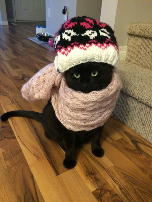 scarf,poorly dressed,Cats,hat