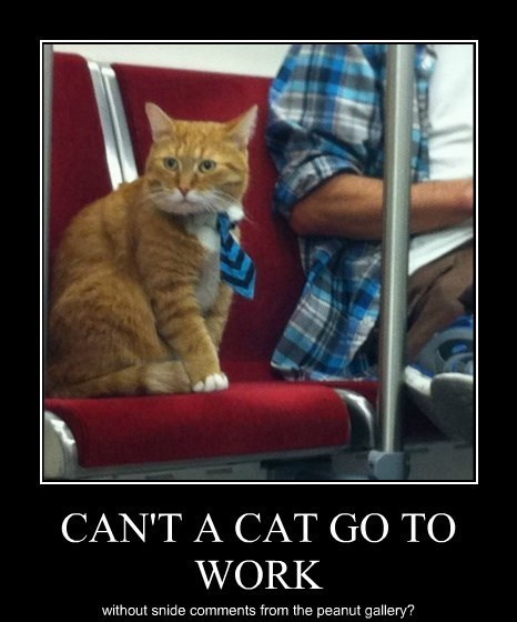 Cats funny work - 8402432512