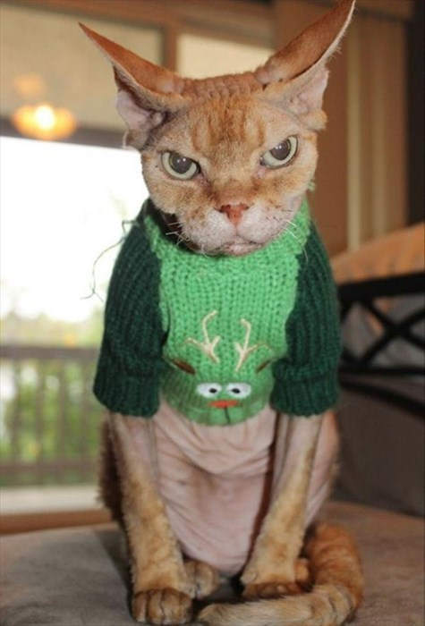 angry,Cats,christmas sweaters,christmas,poorly dressed