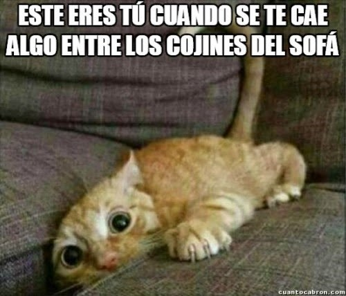 bromas Memes medios gatos animales - 8402512896
