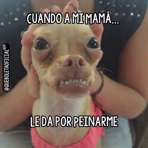 bromas perros Memes animales - 8402605056