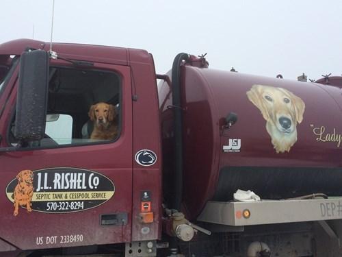 dogs puns ruff animals - 8402646016