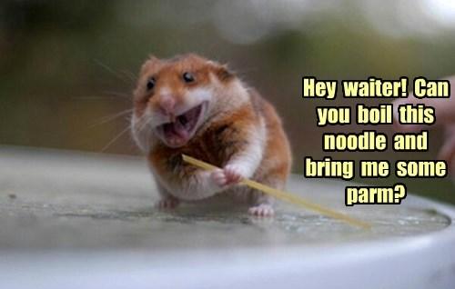 hamster noms noodle - 8402674176