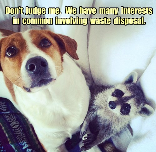 dogs,garbage,friends,raccoons
