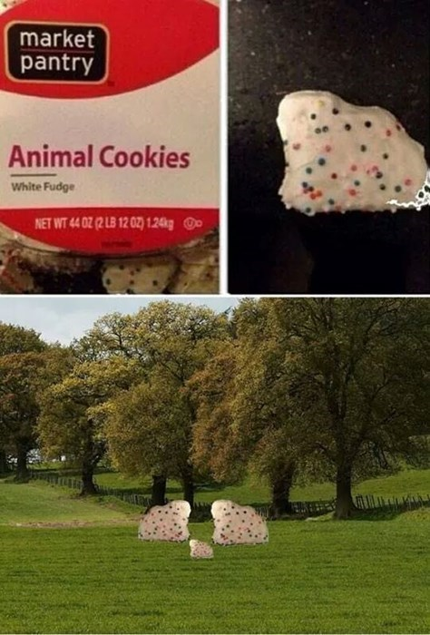 Nailed It animals cookies