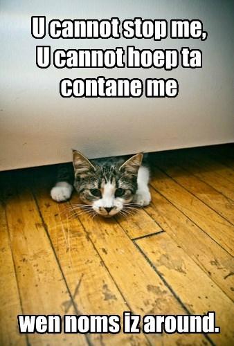 Cats noms - 8402762240