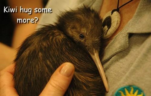 birds kiwi squee hug - 8403131392