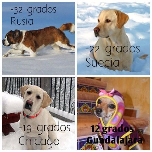 bromas perros Memes animales medios - 8403152384