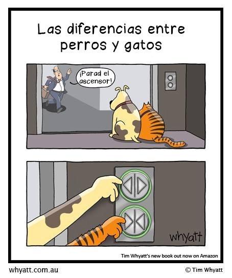 gatos bromas viñetas perros animales - 8403300864