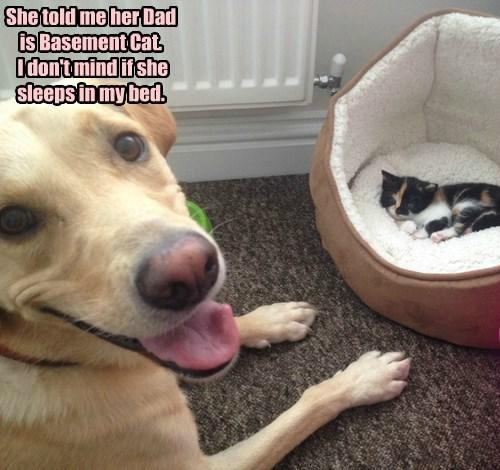 basement cat dogs kitten Cats - 8403332096
