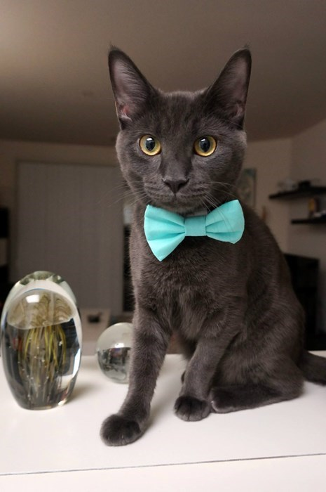 fancy cute Cats - 8403351296