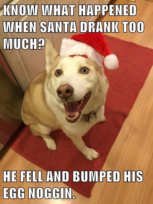 animals christmas dad joke dogs jokes santa - 8403830784