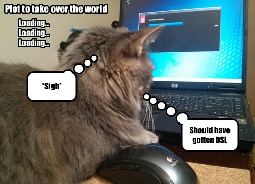 the internets,world domination,dial up,Cats