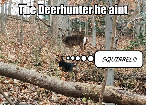 dogs,squirrel,deer