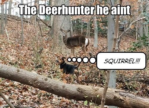 dogs squirrel deer