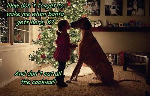 Now don't forget to wake me when Santa gets here, K? And don't eat all the cookies!!