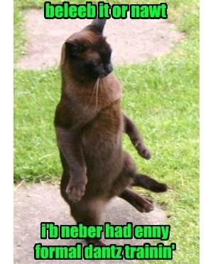true story dance Cats - 8404006656