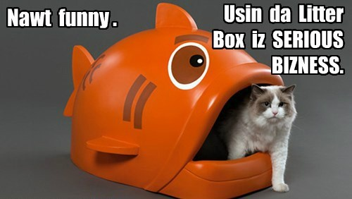 litter box,Cats,not funny