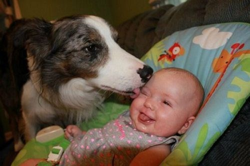 dogs baby lick parenting
