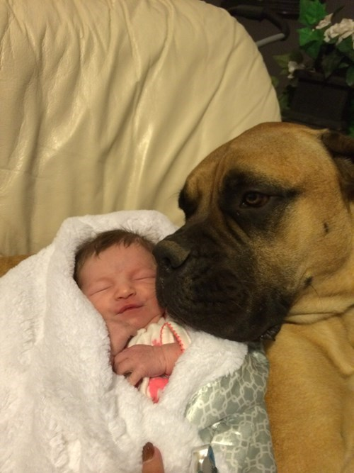 dogs baby BFFs cute - 8404225024
