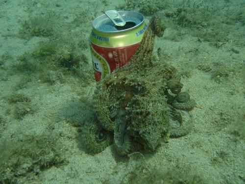 beer drunk funny octopus - 8404377344