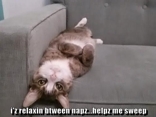 animals napping relax Cats - 8404419072