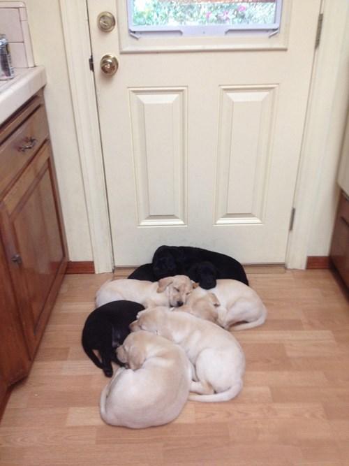 puppy cute sleeping - 8404454400