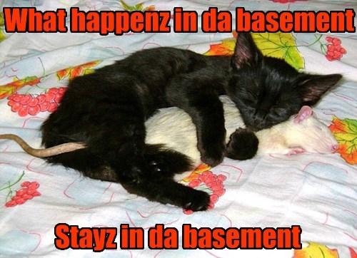 basement cat Cats mouse - 8404975872
