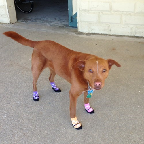 dogs poorly dressed socks g rated - 8405176576