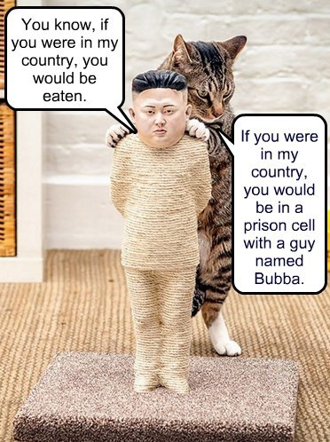 Cats kim jong-un prison North Korea - 8405186304